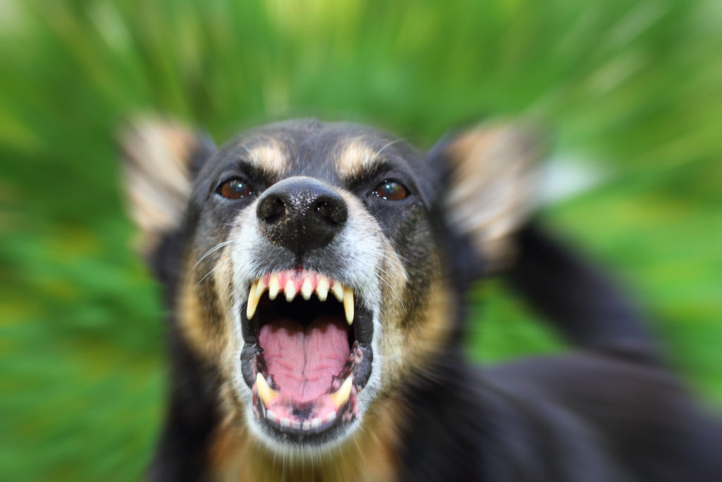 Bitten by a Dog? What Victims of Dog Attacks Need to Know