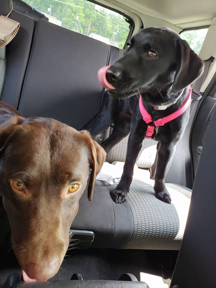 Pet Laws: Rescue from Motor Vehicle